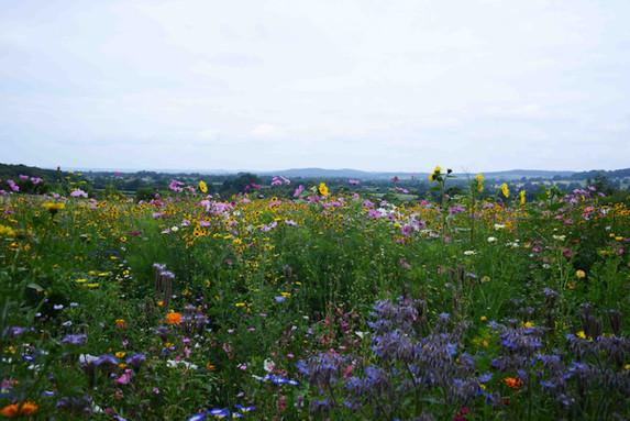 NaviHo Rewilding Flower Meadow.jpg