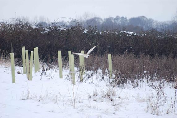 NaviHo Rewilding Barn Owl.jpg