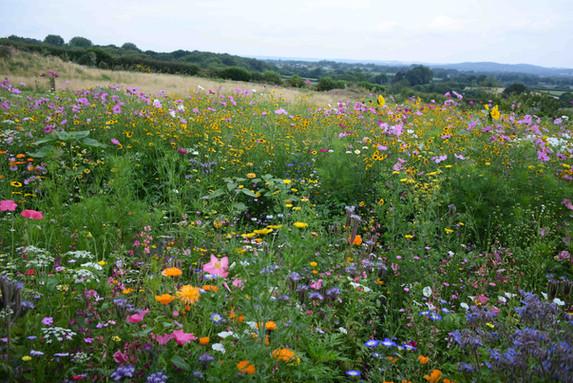 NaviHo Rewilding Flowers.jpg