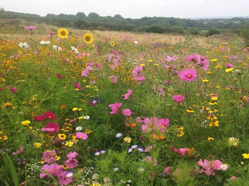 NaviHo Rewilding Wild Flowers.jpg
