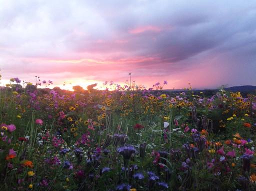 NaviHo Rewilding Sunset.jpg