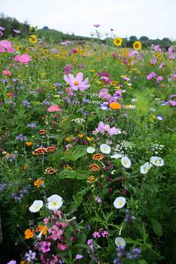 NaviHo Rewilding Wildflower Meadow.jpg
