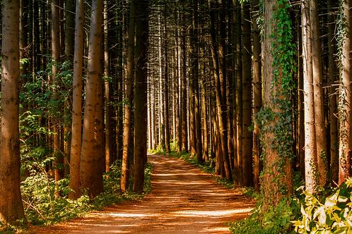 Cedarwood Trail