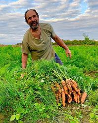 farmer carrots