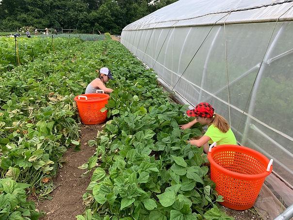 picking veg.jpeg