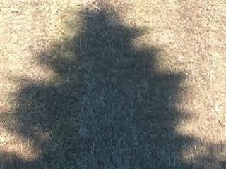 Ein Schatten