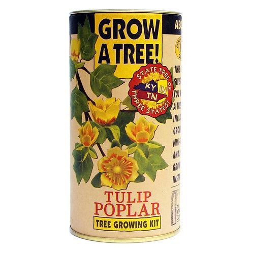 Tulip Poplar   Seed Grow Kit