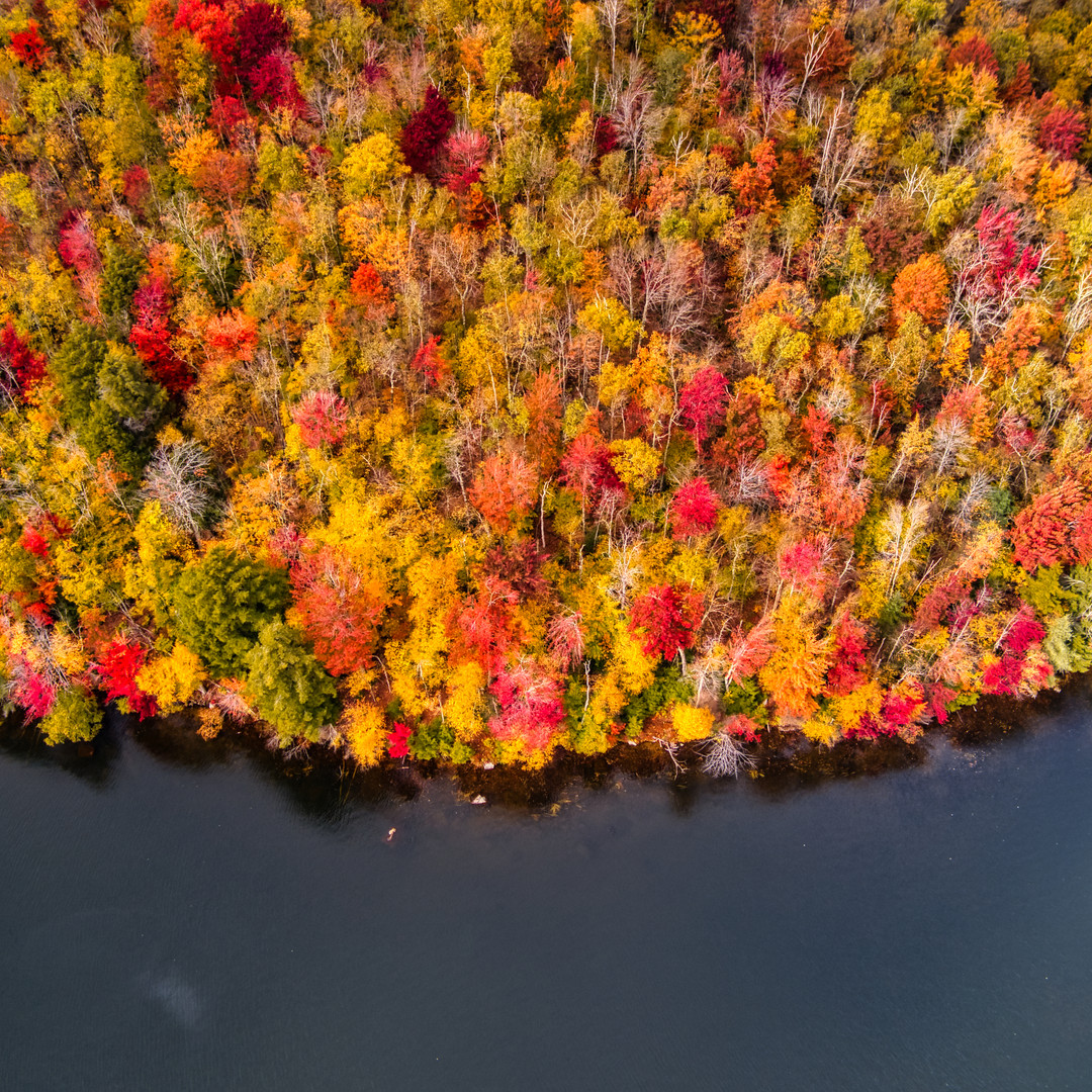 trees and lake.jpeg