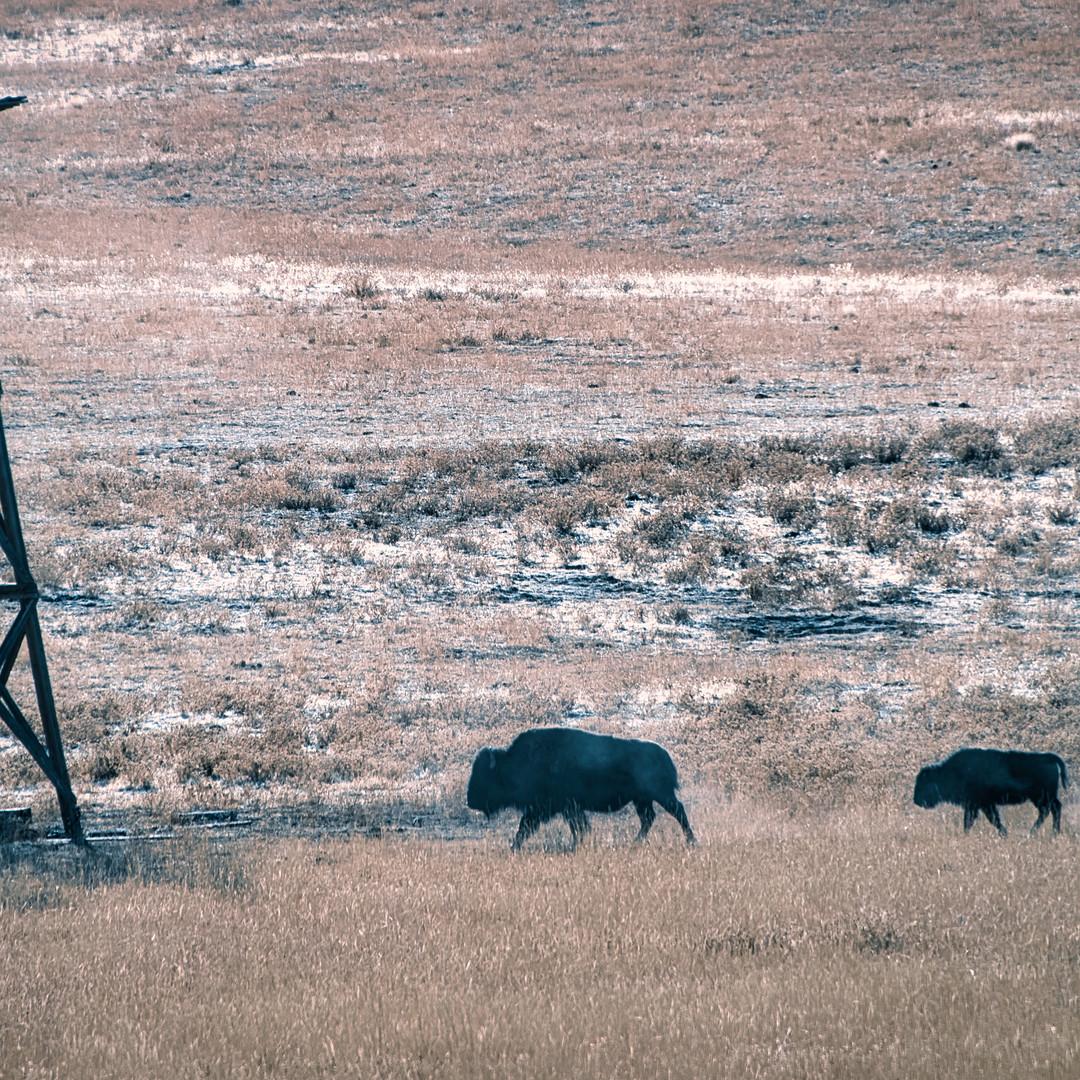 cold buffalo pano 2.jpeg