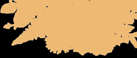 citrus illustration-01.png