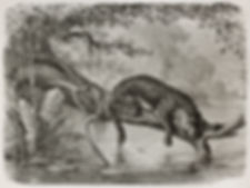 bad ass jaguar.jpg