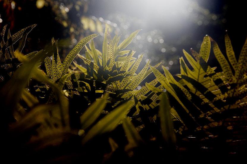 jungle - youryogazone_edited.jpg
