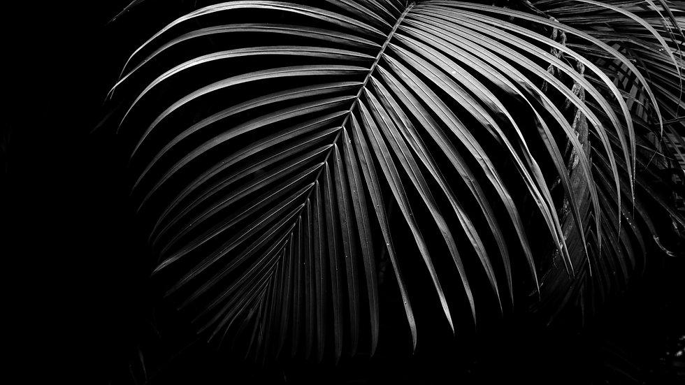 palmier - youryogazone
