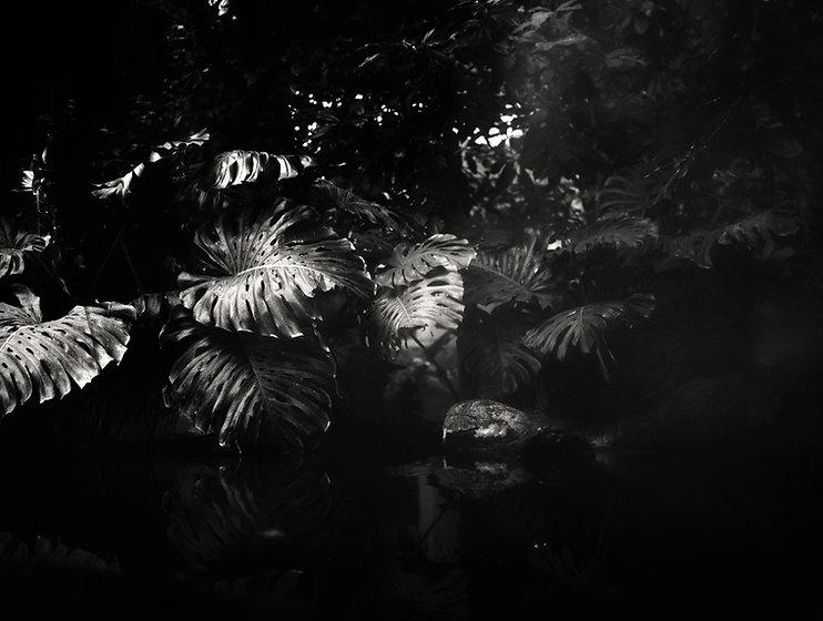 jungle fever - youryogazone