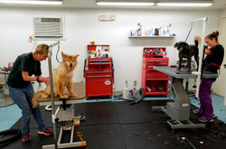 grooming tables