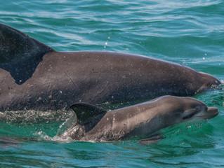 16th June 2019 Port Stephens Community Dolphin Census