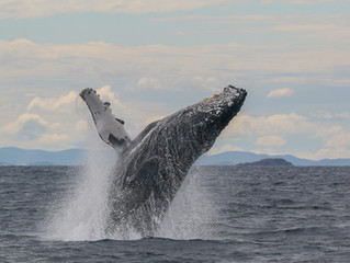 Sea Stories: The Nature of Whales