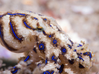The World of Seahorses and Marine Critters in Port Stephens
