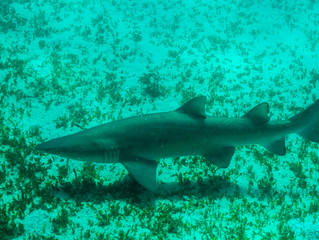 Spotlight on Sharks!