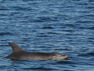 Dolphin census 2015 finds healthy population in Port Stephens