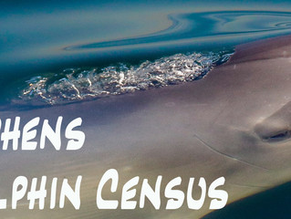 2017 Port Stephens Dolphin Census Results