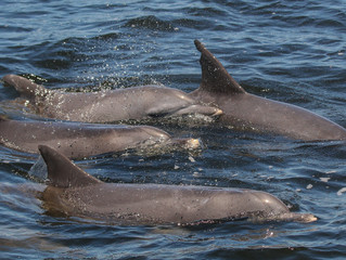 POSTPONED: 2016 Port Stephens Community Dolphin Census