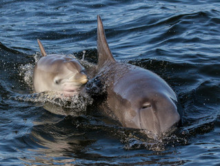 New Date! Port Stephens Community Dolphin Census
