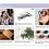 Thumbnail: SS22 Eyewear Trend Book
