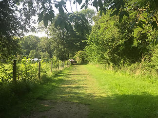 woodland walks at swattesfield campsite in thornham magna