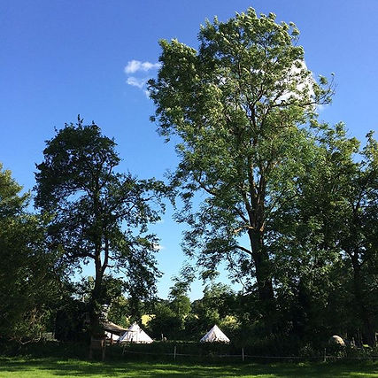 Trees and bell tents at swattesfield campsite