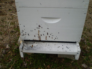 Spring is on its way and so is Nosema...