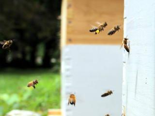 Beekeeping Ordinances in Michigan