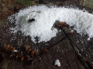 Winter Hive Happenings