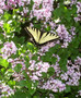 It's Butterfly Time at Frederik Meijer Gardens