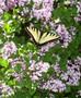 It's Butterfly Time at Frederik Meijer Gardens