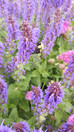 Gardening Plans for Pollinators – Nix the Neonics