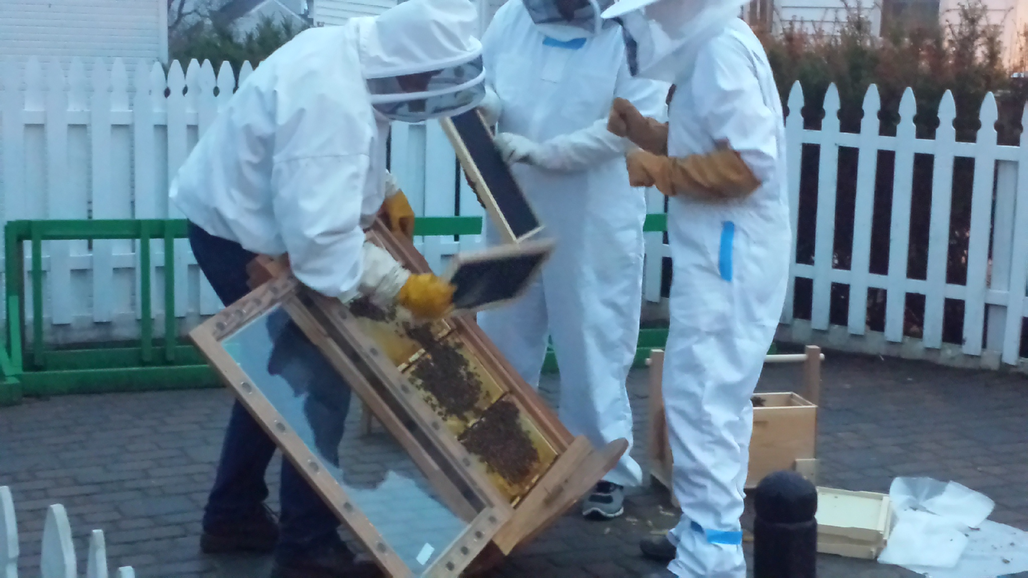 Adding bees to hive