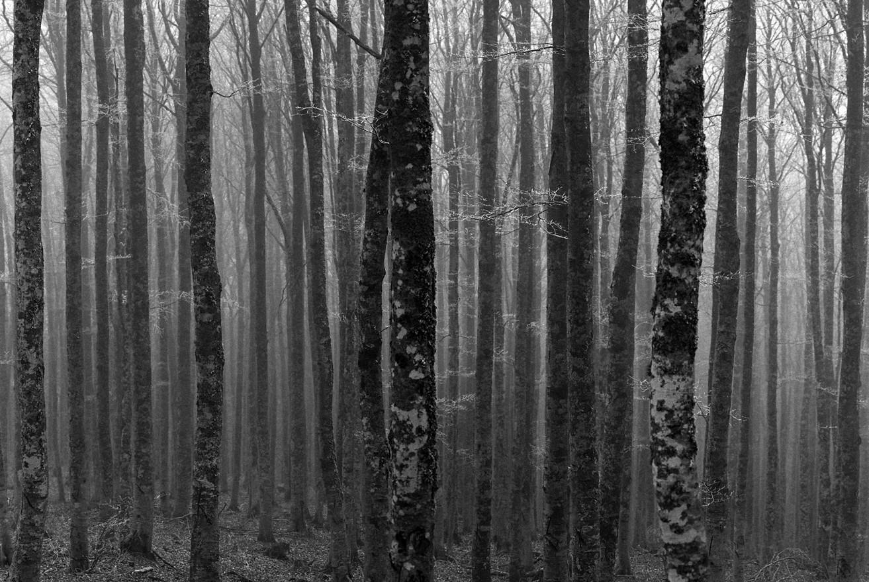 « Dans la forêt de l'Aigoual »