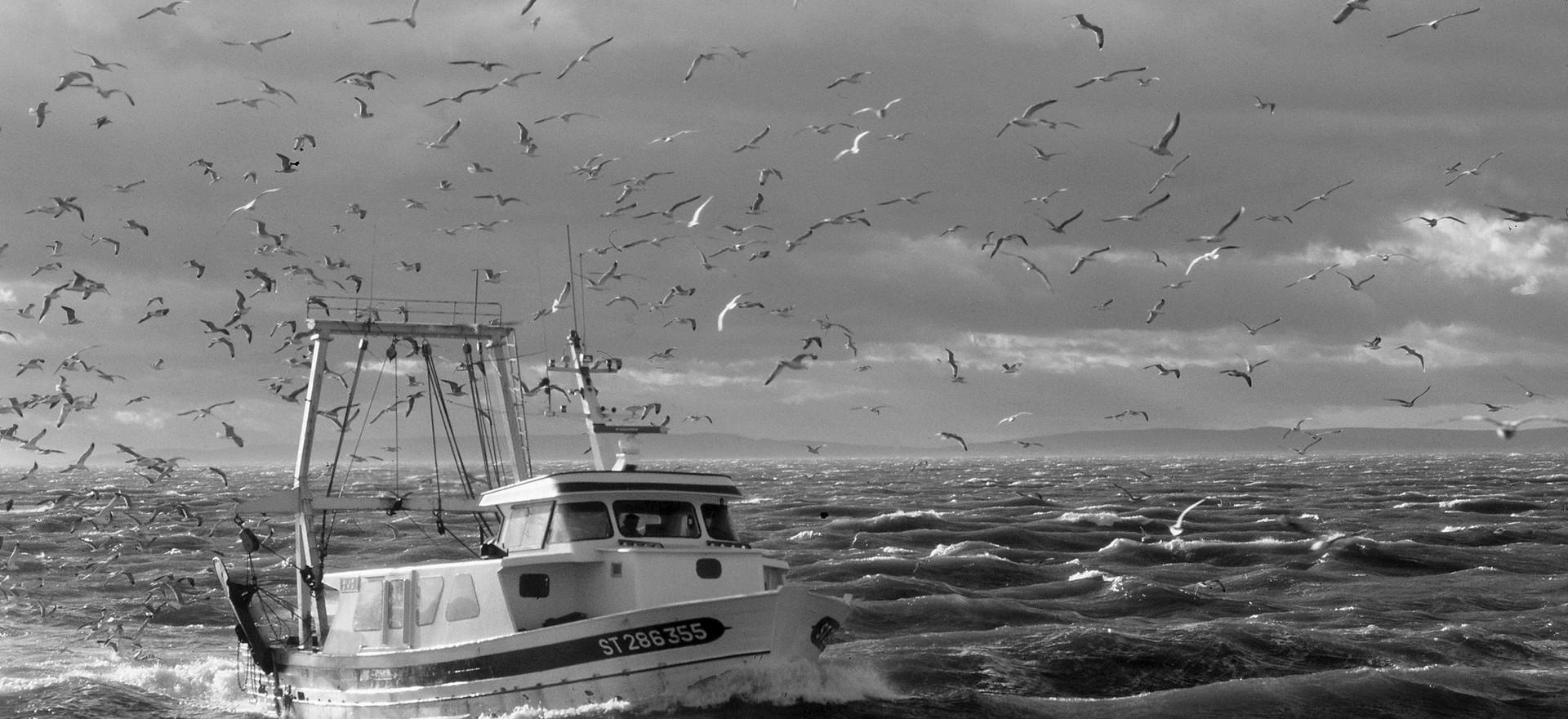 « Le-Grau-du-Roi, retour de pêche »