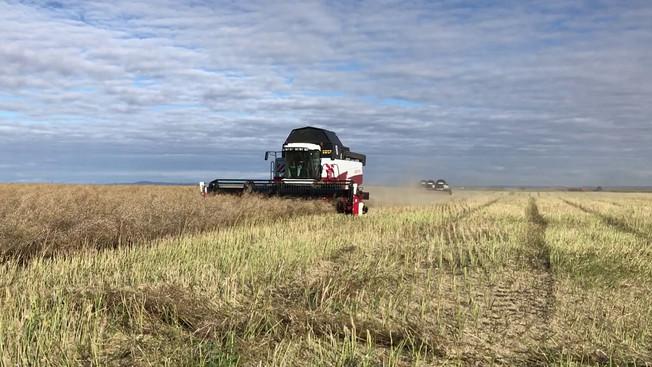 Уборочная кампания «Комсомольца» в разгаре: собрано 20 тыс. тонн рапса и 12 тыс. тонн пшеницы