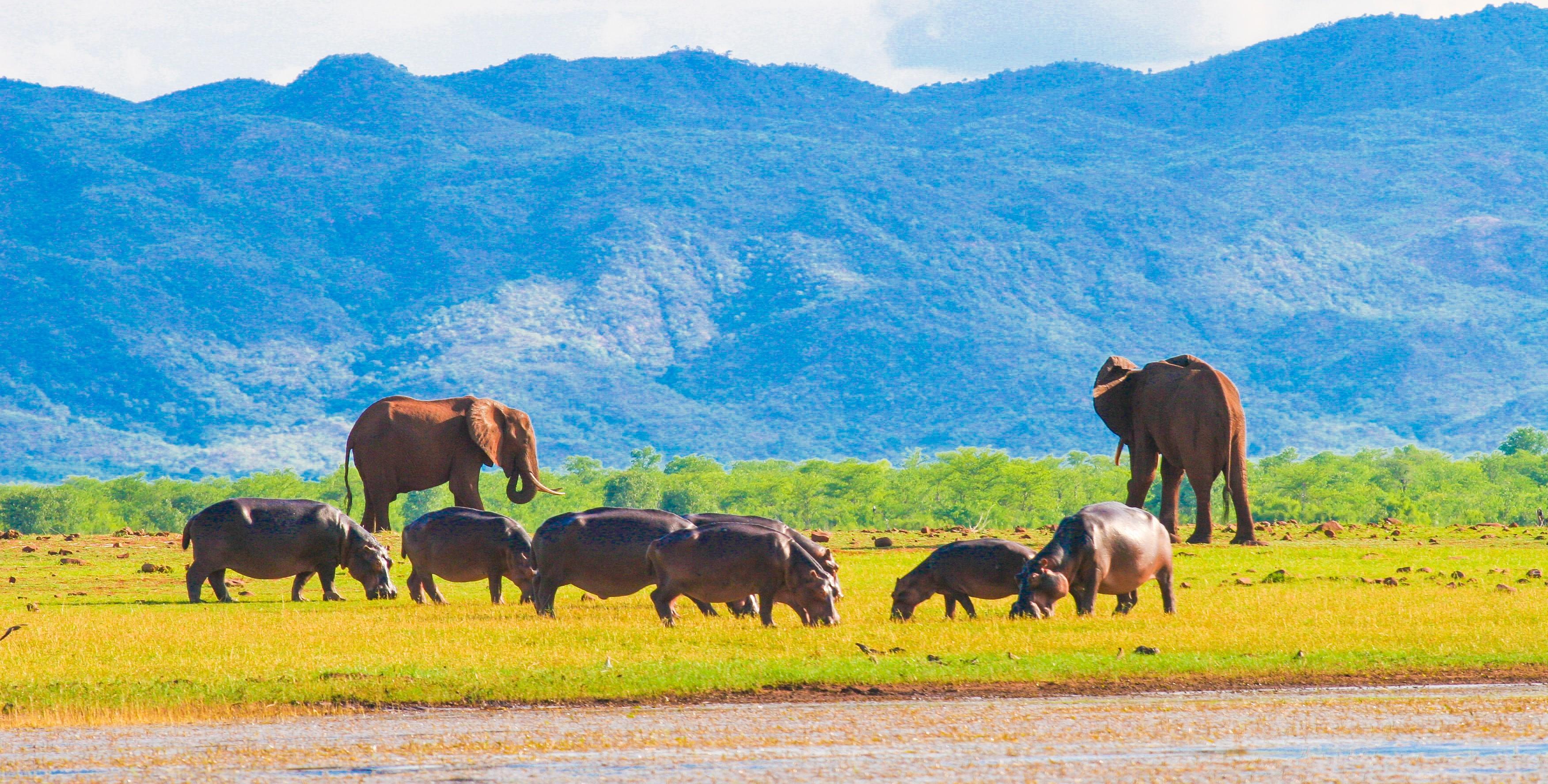 lake-kariba-zimbabwe-wildlife