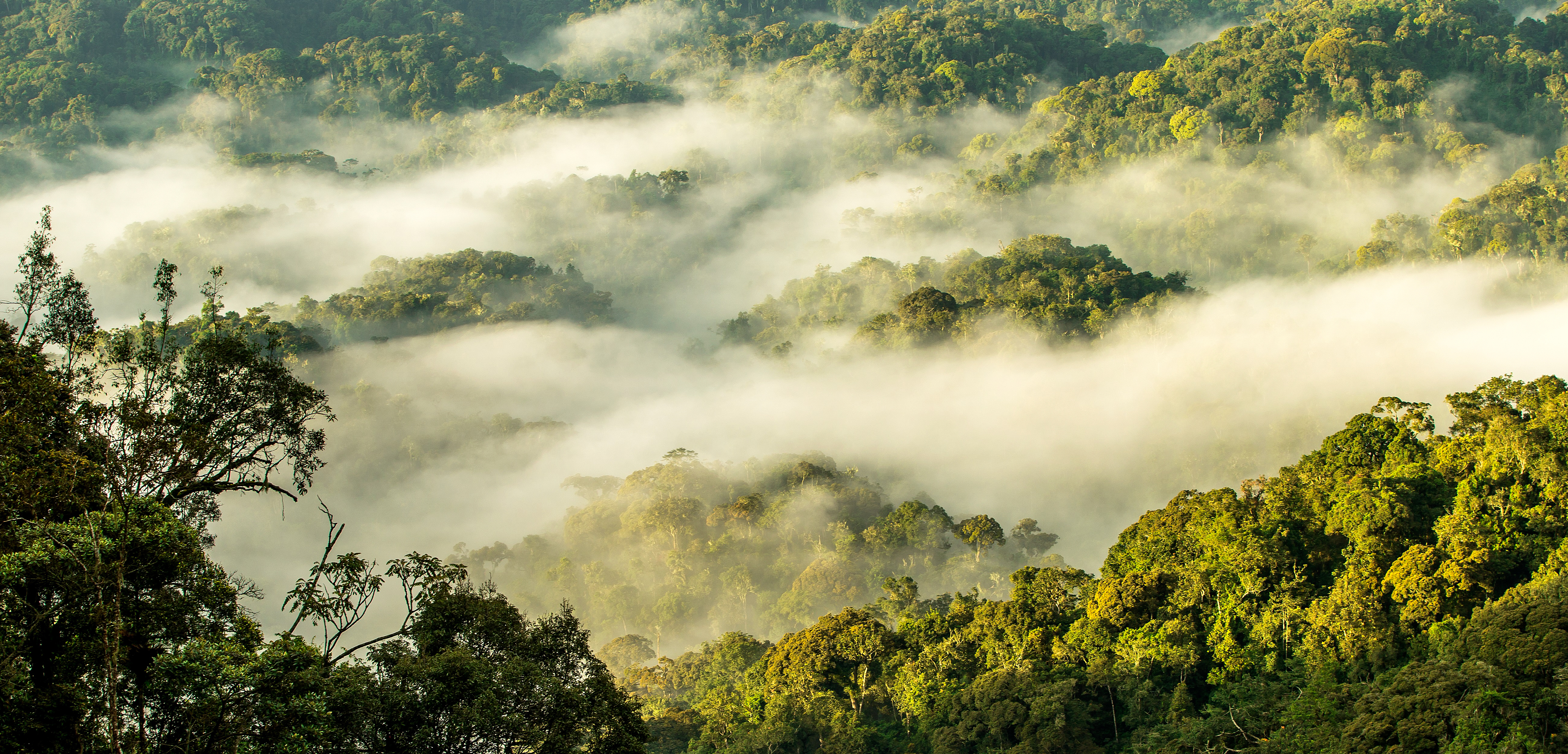 nyungwe-forest-morning-mist
