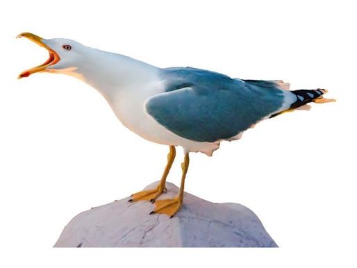 Angry Seagulls