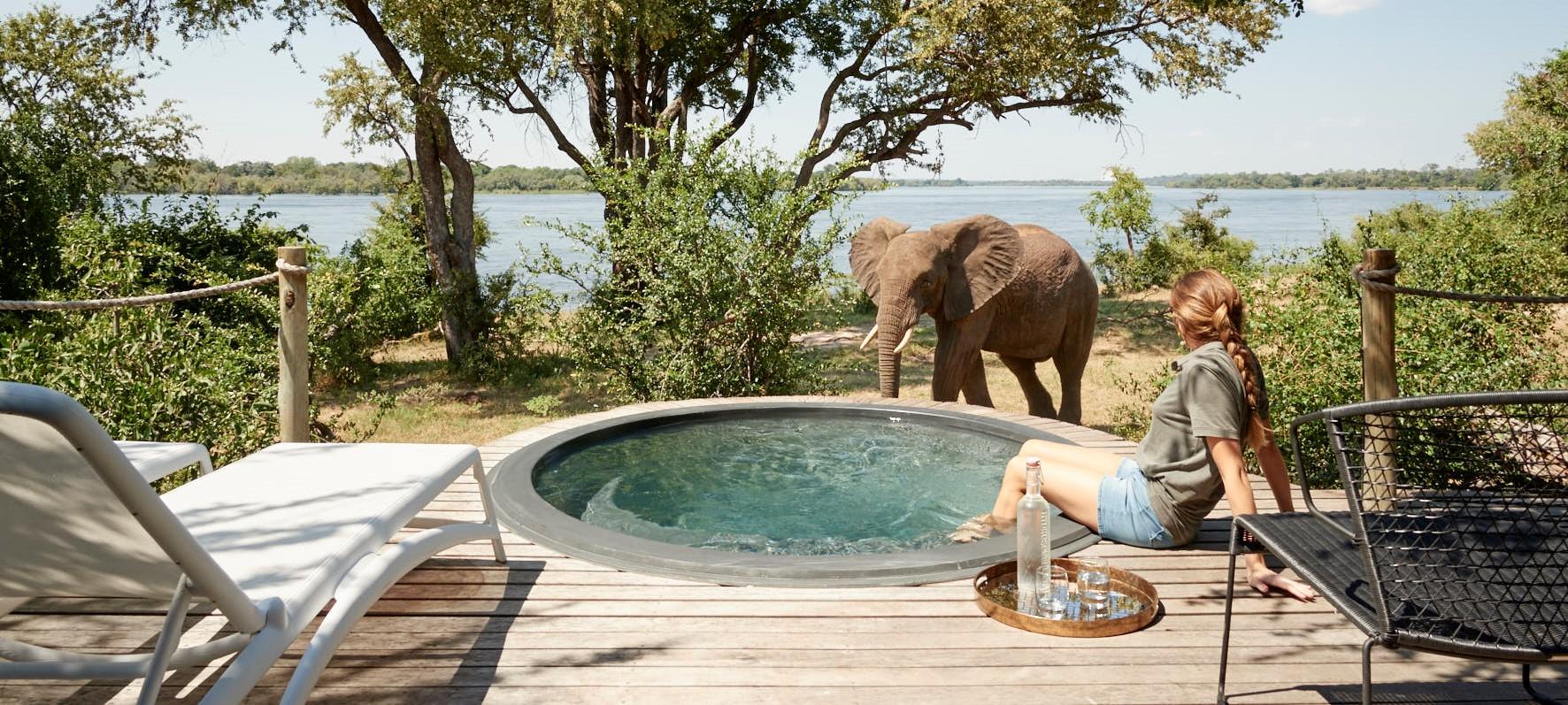 elephant-beside-river-lodge-plunge-pool.