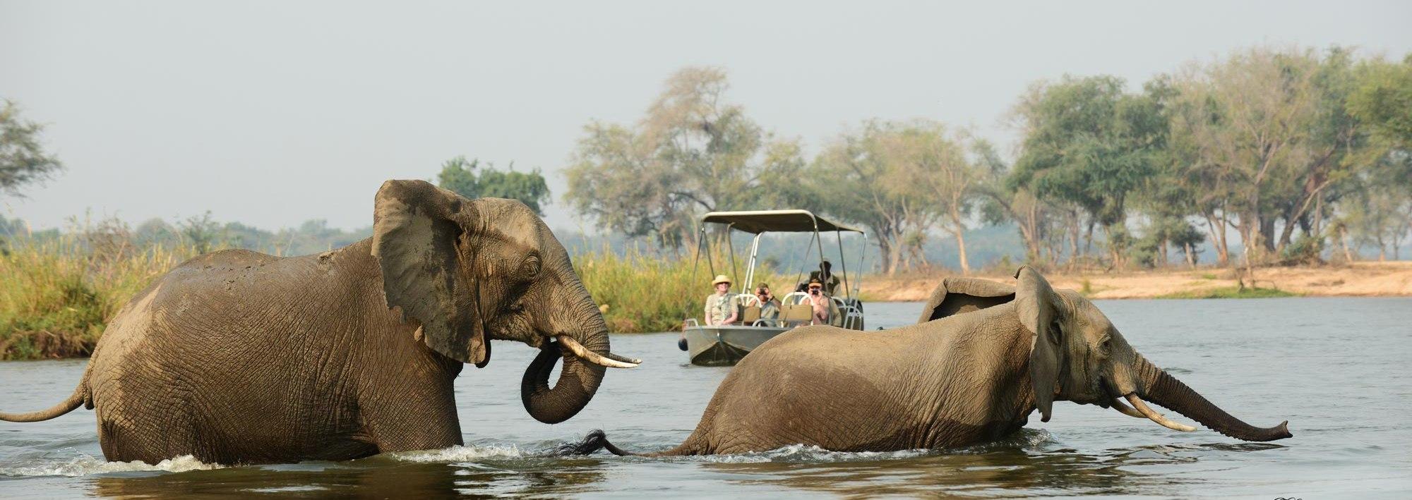 sausage-tree-camp-river-safari