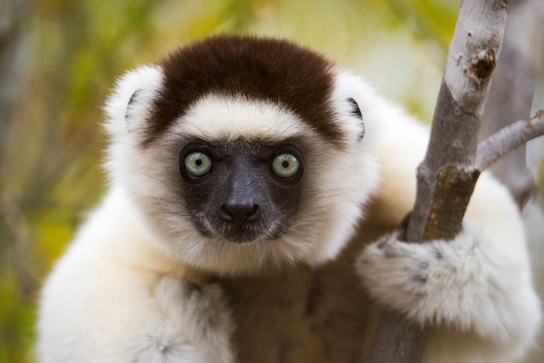 mandrare-madagascar-lemur-safari