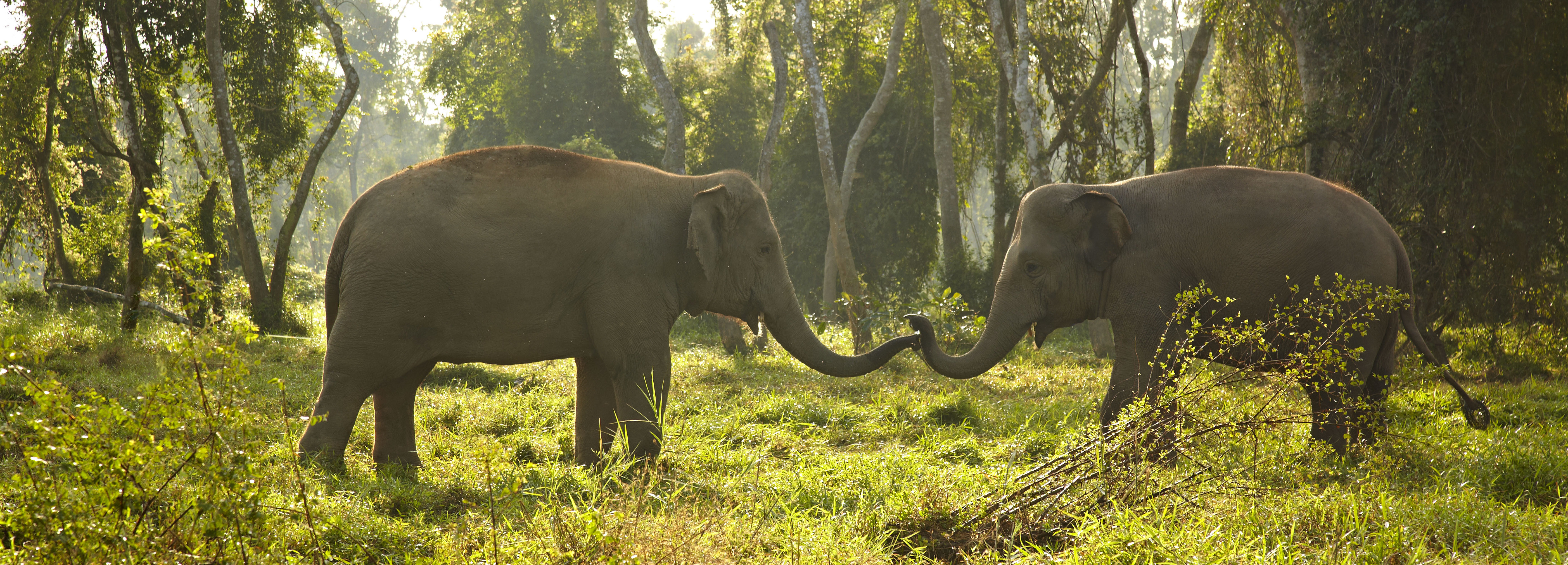elephants-golden-triangle-thailand