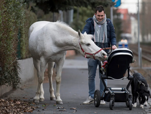 Horse Takes Daily Walk in Frankfurt - Alone