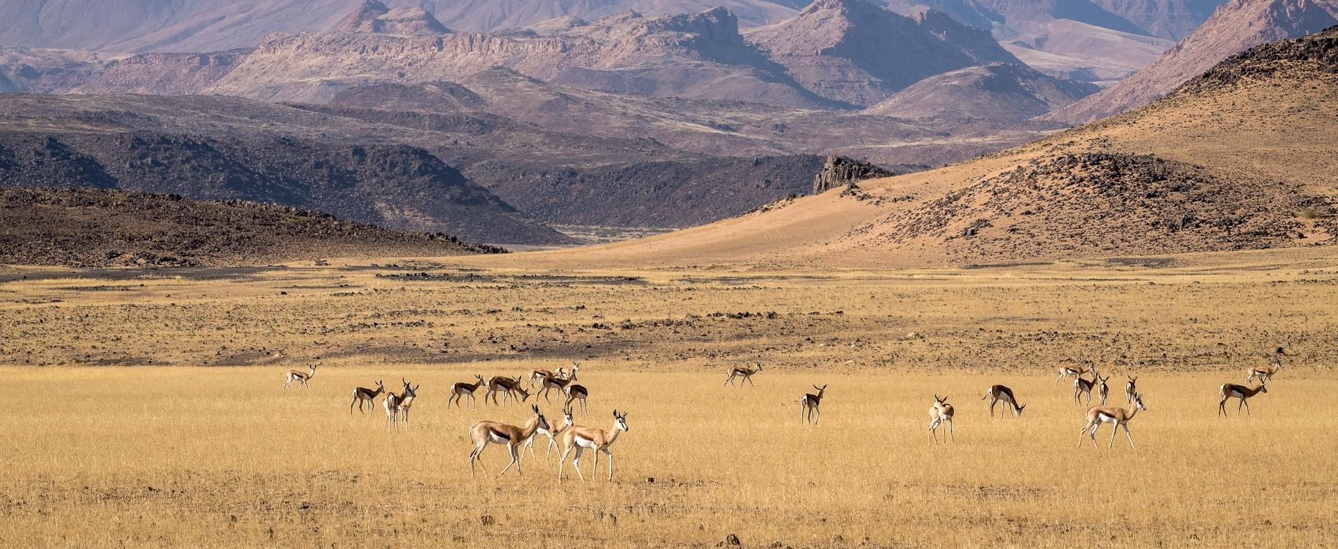 damaraland_wildlife_grazing