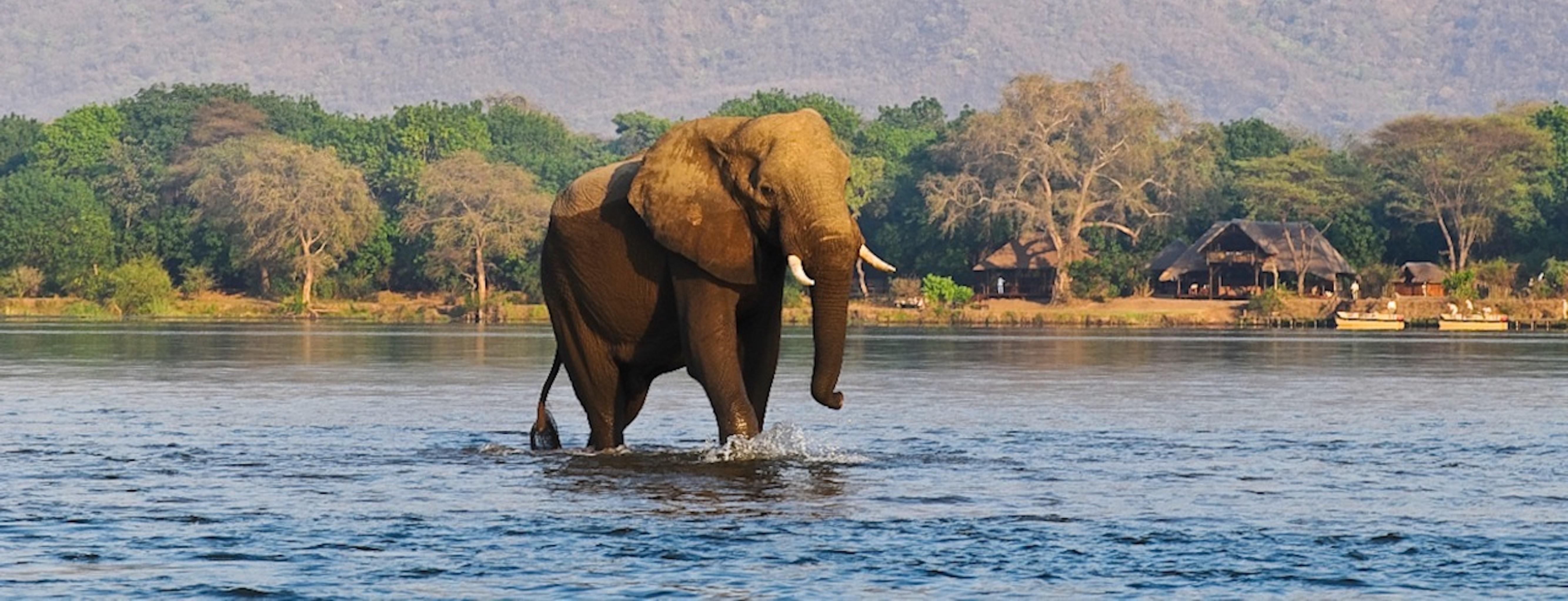 chiawa-camp-elephant-zambezi-river